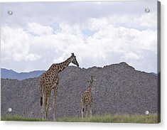 Love Acrylic Print by Molly Heng