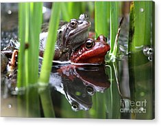 Love Reflection Acrylic Print