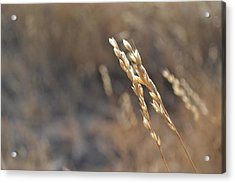 Love The Light Acrylic Print by Rima Biswas