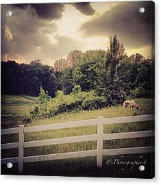 Love This Photo Of A #horse On A #hill Acrylic Print