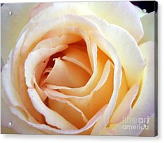 Love Unfurling Acrylic Print
