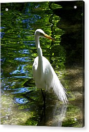 Lovely Bird Acrylic Print by Judy Wanamaker