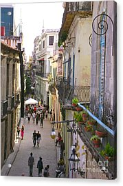 Lovely Havana Acrylic Print by Laurel Fredericks