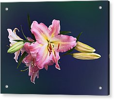 Lovely Pink Lilies Acrylic Print by Susan Savad