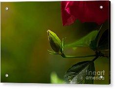 Loves' Bloom Acrylic Print