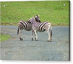 Lovin' Stripes Acrylic Print by Wendy McKennon