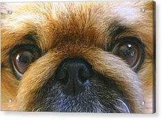 Acrylic Print featuring the photograph Loving Eyes by Jeanne Andrews