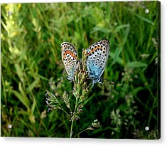 Loving Acrylic Print by Lucy D