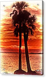 Loving Palms-the Journey Acrylic Print