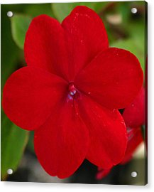 Acrylic Print featuring the photograph Loving Red by Jeanne Andrews