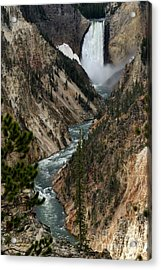Acrylic Print featuring the photograph Lower Falls And Yellowstone River by Living Color Photography Lorraine Lynch