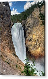 Lower Falls, Grand Canyon Of Yellowstone Acrylic Print by Jill Clardy