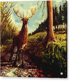Lowland Stag Acrylic Print by Graham Keith