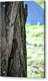 Lucky Tree Acrylic Print by Amee Cave