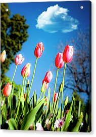 Lucy In The Sky Acrylic Print by Tamyra Ayles