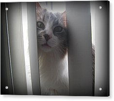 Acrylic Print featuring the photograph Lulu by Rosemarie Hakim