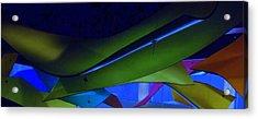 Luluminous 1 Acrylic Print by Randall Weidner