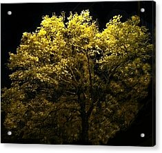 Acrylic Print featuring the photograph Luminescent Dogwood  by Elizabeth Coats
