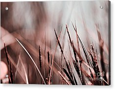 Luminis - S03a - Brown Acrylic Print by Variance Collections