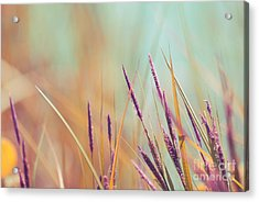 Luminis - S07b Acrylic Print by Variance Collections