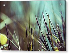 Luminis 02 - S01a Acrylic Print by Variance Collections