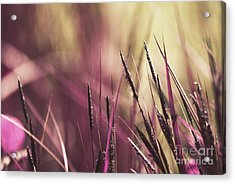 Luminis 02 - S11a Acrylic Print by Variance Collections