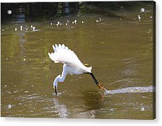 Acrylic Print featuring the photograph Lunch Coming Up by Jeanne Andrews