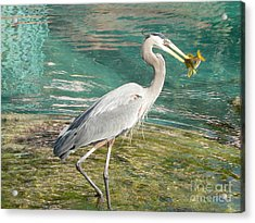 Lunchtime Acrylic Print by Laurel Best