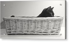 Lurking In The Basket Acrylic Print by Bernadette Kazmarski
