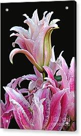 Luscious Lilies Acrylic Print