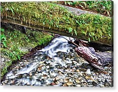 Acrylic Print featuring the photograph Lush-ous by Kevin Munro