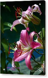 Lushes Fragrant Lilies Acrylic Print