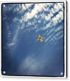 Luxury Flight Acrylic Print