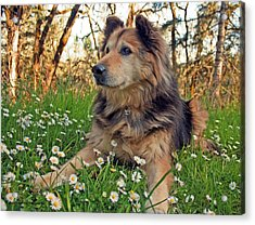 Acrylic Print featuring the photograph Lying In The Daisys by Tyra  OBryant