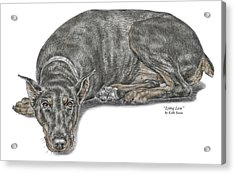 Acrylic Print featuring the drawing Lying Low - Doberman Pinscher Dog Print Color Tinted by Kelli Swan