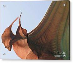 M4 Acrylic Print by Leo Symon