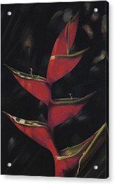 Macaw Flower - Heliconia Bihai Acrylic Print by Ben Kotyuk