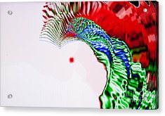 Macaw Acrylic Print by Tashia Peterman