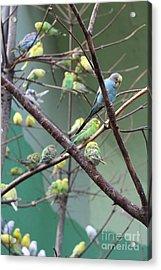 Macaw Acrylic Print by Yuro Choi