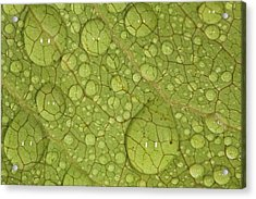 Macro Image Of A Magnolia Leaf Acrylic Print by Laszlo Podor Photography
