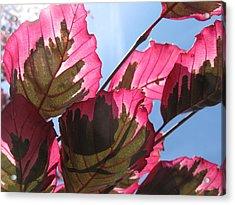 Macro Leaves Acrylic Print by Sean Seal