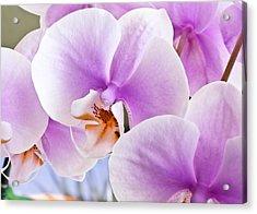 Macro Pink Orchids Acrylic Print by Joe Carini - Printscapes