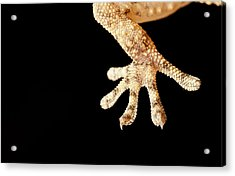 Macro Reptil Acrylic Print by Izlemus
