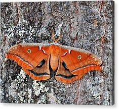 Madam Moth Acrylic Print by Al Powell Photography USA