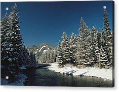 Madison River, Gallatin National Acrylic Print