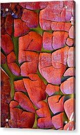 Madrone Acrylic Print