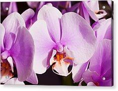Magenta Orchids Acrylic Print by Joe Carini - Printscapes