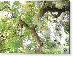 Magic Bush Acrylic Print by Bruno Santoro