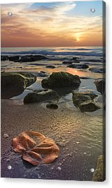 Magic Every Moment Acrylic Print by Debra and Dave Vanderlaan