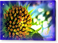 Magic Flower Acrylic Print by Maria Scarfone